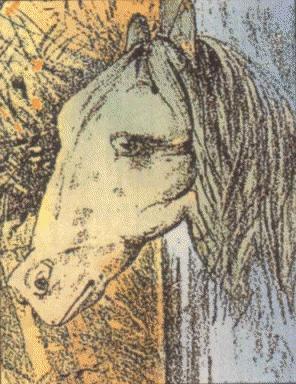 ¿La cabeza de un caballo o de una rana?