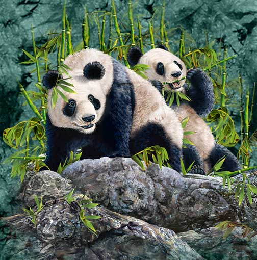 Encuentra 9 pandas