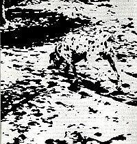 ¿Logras ver al perro?