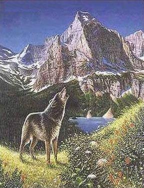 Encuentra 5 lobos